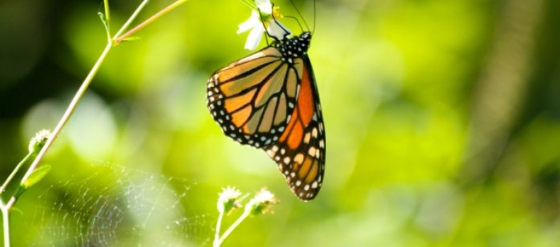 BASF Innovates For Butterfly Conservation