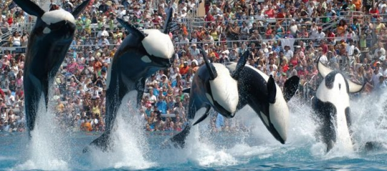 SeaWorld Can't Win For Losing
